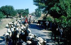 INDIA Y NEPAL 1986 - 122 (JAVIER_GALLEGO) Tags: india 1986 diapositivas diapositivasescaneadas asia subcontinenteindio cachemira kashmir rajastán rajasthan bombay agra taj tajmahal srinagar delhi