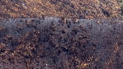 verbrannt (Geonaut) Tags: gardenroute südafrika za