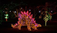 stegosaurus at the River of Lights (johngpt) Tags: lights trees fujinonxf55200mmf3548rlmois tree fujifilmxt1 dinosaur festivalgreen stegosaurus riveroflights places abqbotanicgardens