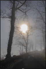 Behind the fog (Steff Photographie) Tags: brouillard hiver soleil flou art nature arbre