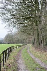 Meander (Arne Kuilman) Tags: d700 harfsen zutphen wandelen uit vakantie netherlands nederland kootwijk deberkenhorst trees bomen hek fence