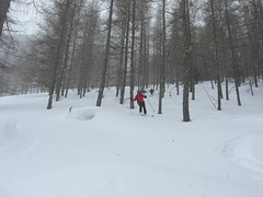 Waldabfahrt (Globo Alpin) Tags: ahrntal winter skitouren weisenbach 2019