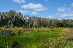 Bay Head (The Vintage Lens) Tags: florida swamp nature green blue skies