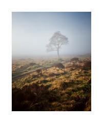 (John Ormerod) Tags: mist misty tree fog landscape nikon derbyshire peakdistrict light