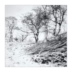 Snow Fall (gerainte1) Tags: hasselblad501 portra160 film colour trees winter snow yorkshiredales
