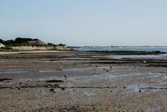 Angoulins sur Mer - Charente Maritime - Direction Pointe du Chirats & Chatelaillon (Elisabeth de Ru) Tags: angoulins charente france charentemaritime 17 geotagged ©elisabethderu sonydslra300 summerholiday2018