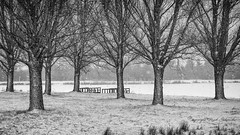 Winter view (Ruud.) Tags: ruudschreuder nikon nikond810 d810 bw zwartwit monochrome blackandwhite blackwhite trees tree winter snow sneeuw tolbergvijver roosendaal northbrabant brabant
