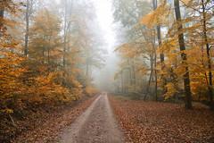 A travers bois (Excalibur67) Tags: nikon d750 sigma globalvision art 24105f4dgoshsma paysage landscape forest foréts arbres trees vosgesdunord automne autumn brume mist alsace