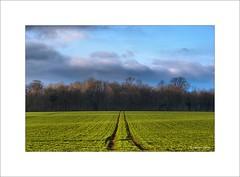 Sur les plateaux d'Artois... (Laurent TIERNY) Tags: nature paysage countryside