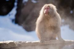Snow Monkeys!!! (CanyoupicitsKento) Tags: jigokudani kirei portrait japan sun asia peaceful sunny outside mountains exterior sony rural kentowatanabe a7riii beautiful