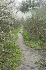 Dollis Valley Path (Loz Flowers) Tags: london barnet dollisvalley