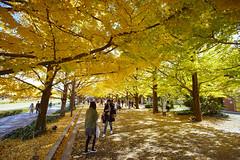 国営昭和記念公園 | 東京 立川 (段流) Tags: sony a7m3 a73 1635mm