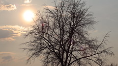 Evening Atmosphere (ruedigerdr49) Tags: evening sun dawn abendstimmung sonne gegenlicht atmosphere sky outside backlight tree