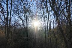 Sun Centered Winter Morning (Modkuse) Tags: provia fujiprovia fujifilmxt2provia fujifilmxt2proviasimulation nature natural landscape sunrise sun woods forest winter fujifilm fujifilmxt2 xt2 xf1024mmf4rois fujinon fujinonxf1024mmf4rois art artphotography fineartphotography fineart photoart