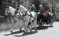 Zweispänniger Viersitzer mit Klappverdeck (gerhardschorsch) Tags: zeiss za ilce7r a7r available availablelight 55mm fe55mm fe55mmf18za festbrennweite vollformat gespann zweispänner pferde red kutsche equipage schimmel horses horsedrawncarriage