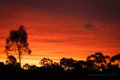 Melbourne sunset (scepdoll) Tags: sunset melbourne summer sun getoutside gumtrees