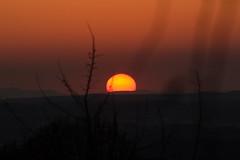 Sonnenuntergang (schnuffelkind1) Tags: goldenestunde deutschland badenwürttemberg tettnang tamron canon orange abend sonnenuntergang