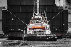 Remorqueur (Philippe POUVREAU) Tags: jaune tug boat ship nazaire saintnazaire port harbour harbor tugboat boluda wedellsborg mouettes gulls 2018 navire cargo loire atla loireatlantique france paysdelaloire