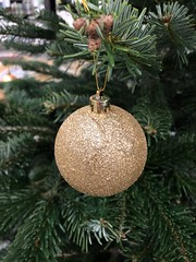 Golden Christmas Tree Ornament (Jonatan Svensson Glad (Josve05a)) Tags: close bright joy holiday fresh season photography fruit christmas ball traditional tree elegance golden shiny tangerine decorate decoration hanging winter balls festive glitter gold ornament branch decorative decor object ornate sweden sphere christmastree christmasornament cultures ornaments sparkly stockholm celebrate celebration closeup singleobject seasonal pine 2017 holidayevent tby