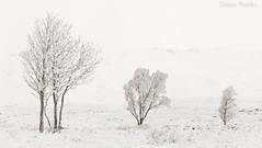 Cold and Frosty Morning (Diane Rocks 3M views. Thank you) Tags: glencoe scotland scottish highlands winter snow deepfrost poorvisibility trees frozen landscape uk greatbritain mountain exploredthankyou