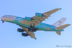Hi Fly (Save The Coral Reefs Livery) / Airbus A380-800 / 9H-MIP (duartemanhita spotter) Tags: hifly savethecoralreefs airport airplane airlines airbus airbuslovers airbusneo a380 a380800 airbus380 airbus380800 spotter sunrise sunset speciallivery livery fly follow followme views cockpit commercialflight planespotter plane photographer lisbonairport lisbon lppt like depart