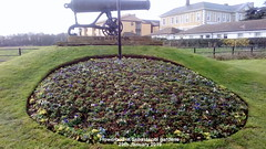 Flowerbed in Sebastopol gardens 29th January 2019 (D@viD_2.011) Tags: flowerbed sebastopol gardens 29th january 2019
