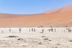 _RJS4689-Edit (rjsnyc2) Tags: 2019 africa d850 desert dunes landscape namibia nikon outdoors photography remoteyear richardsilver richardsilverphoto safari sand sanddune travel travelphotographer animal camping nature tent trees wildlife