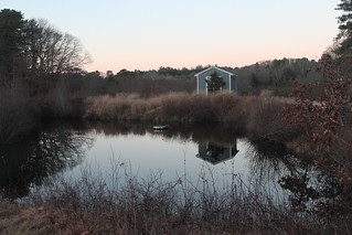 Cranberry Bog Landscape