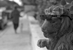 Cool Cat (PositiveAboutNegatives) Tags: nikon slr vintagecamera nikonf plainprism eyelevel cosinavoigtlander 58mm cv58mmnokton voigtlander film analog bw blackandwhitefilm foma fomapan fomapan200 yellowfilter rodinal coolscan bokeh lakeworth florida