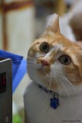 DSC_0316_01 (Juan R. Lascorz) Tags: gato gat chat cat katze haustier haustiere mascota mascotas pet pets animaldecompagnie animauxdecompagnie