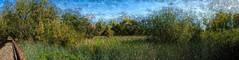 Digital Watercolor - Wetlands in November Panorama - HSS (randyherring) Tags: ca california centralcaliforniavalley cosumnesriverpreserve elkgrove afternoon aquaticbird nature outdoor recreational waterfowl wetlands