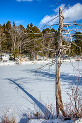 Winter shadows at Shubie Park, Dartmouth Nova Scotia (internat) Tags: 2019 canada novascotia ns shubiepark shadow winter eosm5 aurorahdr hdr