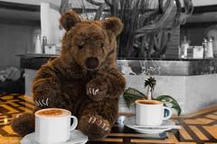 Zwei Koffein-Junkies --- Two caffeine junkies (der Sekretär) Tags: cappuccino drache edna getränk heissgetränk holz kaffe kaffeetasse plüschtier spielzeug stein tasse teddy teddybär tisch tresen bar beverage coffee coffeecup cup dragon drink hotbeverage hotdrink softtoy stone stuffedtoy table teddybear toy wood