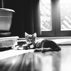 Lovely Frida (theresalindemann) Tags: filmisnotdead pentacon blackandwhite cat analog
