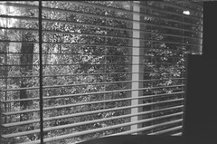 My bedroom window blinds (Matthew Paul Argall) Tags: beirettevsn manualfocus 35mmfilm blackandwhite blackandwhitefilm kentmere100 100isofilm window