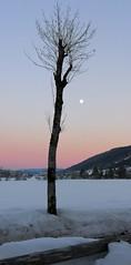 Back in beautiful Ober Allgäu (MargrietPurmerend) Tags: fullmoon supermoon sunset oberallgäu thalkirchdorf snow wintersport