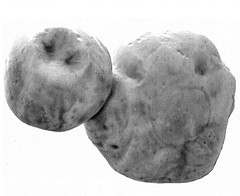 Best View of Ultima Thule, variant (sjrankin) Tags: 28february2019 edited nasa newhorizons grayscale mu69 ultimathule comet asteroid contactbinary 2014mu69
