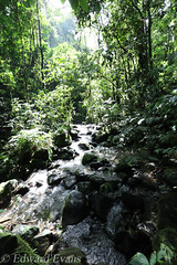 Rainforest stream (edward.evans) Tags: conservation habitat stream amphibian endangered guayacánrainforestreserve guayacan crarc siquirres costarica rainforest wildlife nature centralamerica latinamerica costaricanamphibianresearchcenter
