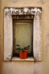 essential like the place (sandrorotonaria) Tags: gallinaro ciociaria window stone flower red old centre
