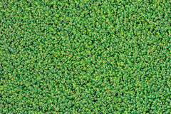Background (Rushay) Tags: abstract plant backgrounds closeup directlyabove macro pattern portelizabeth southafrica