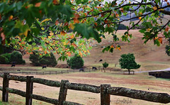 Autumn leaves and rustic fence (Riley-Dobe) Tags: