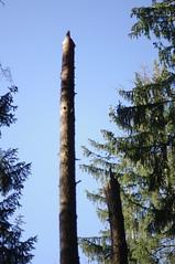 Umgeknickt (shortscale) Tags: baum sturmschaden wald