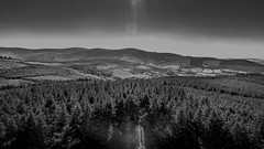 Above the canopy (Gullivers adventures) Tags: dji eire mountain wideopen sun forest love hiking walking trees nature flying high sunflare peace space