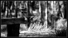 Potman (bushman58929) Tags: monotones blackwhite bushman58929 olympus digital australia photography potman perspective