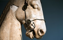 Greek horse, British Museum (archidave) Tags: london british museum britishmuseum assyrian sculpture statue greey marble horse head
