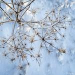 Winter Flower - Fleur d'hiver thumbnail