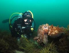 Cuttlefish - Queenscliff (watsonphil35) Tags: queenscliff cottage cuttlefish