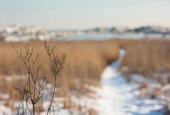 Cold seascape, Færder nationalpark, Norway (KronaPhoto) Tags: 2018 vår seascape snø natur dofnature dof bokeh shapes landscape landskap canon5d snowbeach snow seaside beachlife path sti nationalpark færdernasjonalpark færder tjøme norway