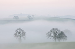 Misty morning over the Farm