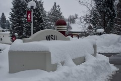 Nap Time (aaronwhiteman) Tags: pullman washington unitedstates us washingtonstateuniversity snow winter bench lewisalumnicentre olympusem5 olympusm1240mmf28 iso200